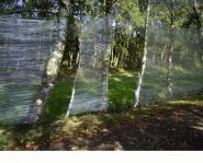 Catching-the-Light-foil-in-a-birch-lane-2003